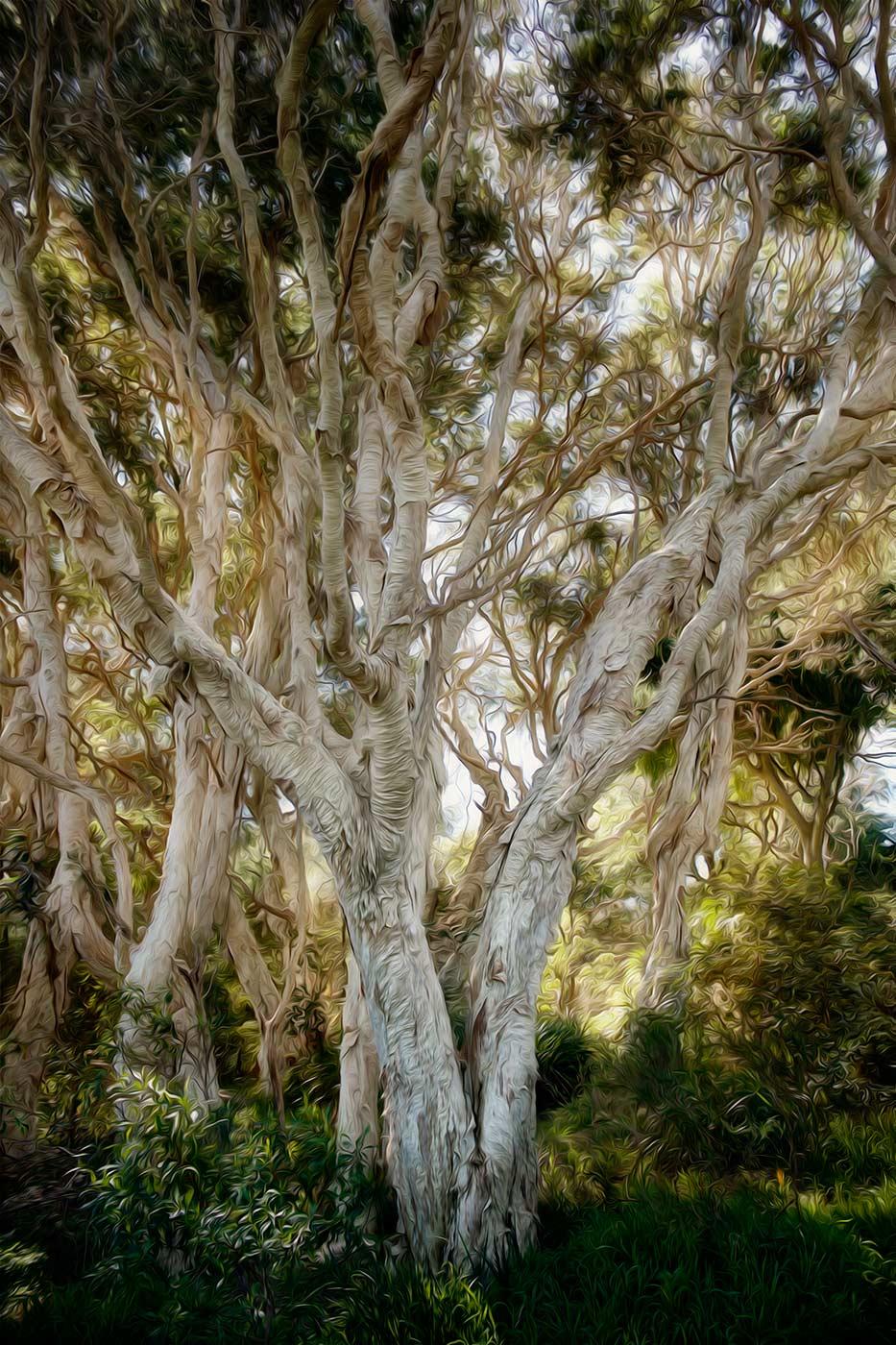 paper bark gumtree grove light in background