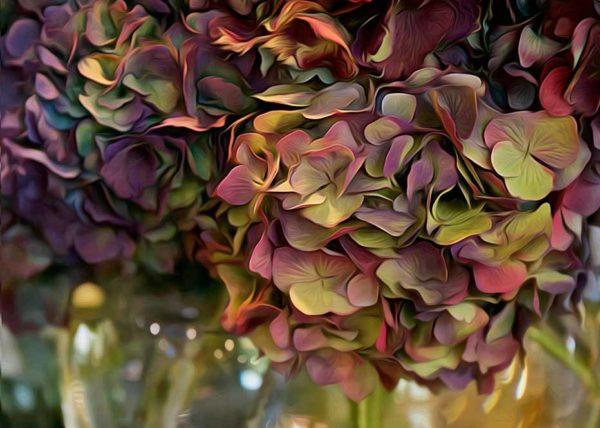 Hydrangea rich colours vintage red aqua violet pink karen visser artist photographer