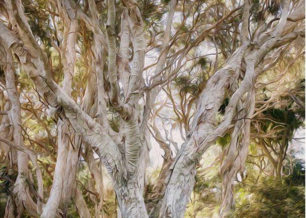 Paper Bark entangle forest mystical light